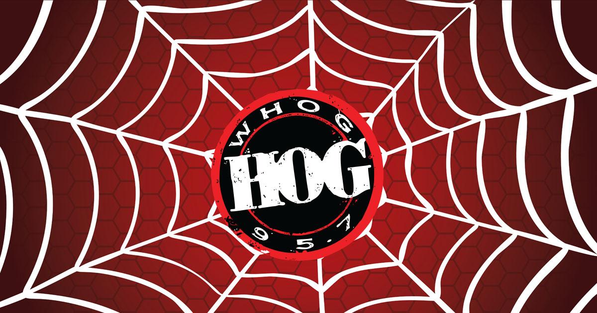 Hog spiderweb