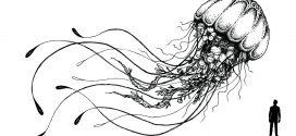 The Godzilla of Jelllyfish