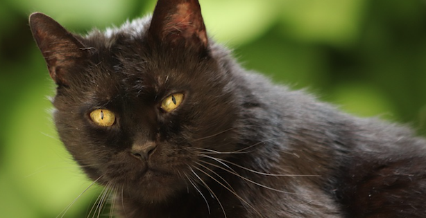 LISTEN: Dramatic Play-By-Play of Black Cat's MetLife Invasion Wins MNF