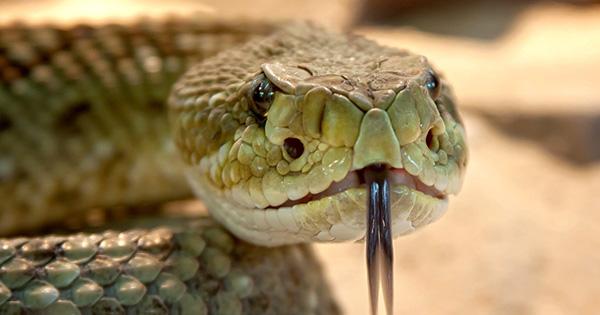 rattlesnake-653642_1280