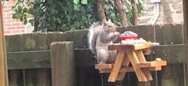 There's a Kit to Make Tiny Picnic Tables for Squirrels