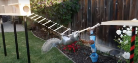 WATCH: Former NASA Engineer Builds Insane Ninja Warrior Course for Squirrels