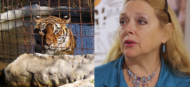 TIGER KING's Carole Baskin Granted Control of Joe Exotic's Former Zoo