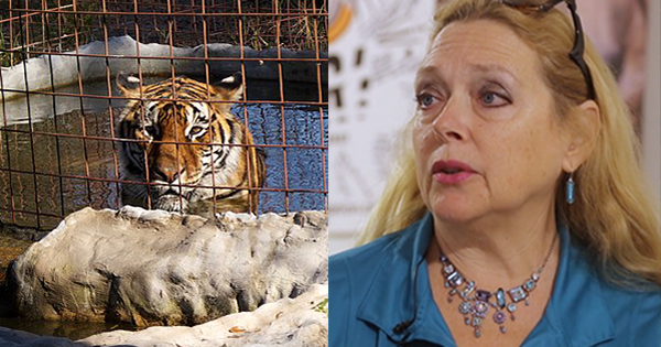 TIGER KING: Handwriting Experts Think Carole Baskin's Missing Husband's Will Was Forged