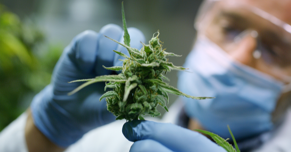 Scientists Say Cannabis Could Help Prevent and Treat Coronavirus